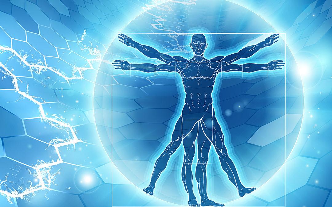 Intuitive Anatomie